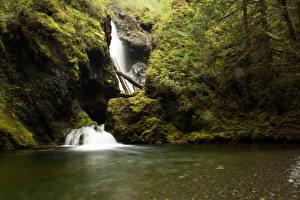 Картинка Канада Водопады Ванкувер Утес Мох Nile Creek Falls Природа