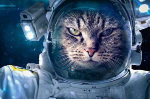 Фотографии Кошки Космонавты Смешные Животные