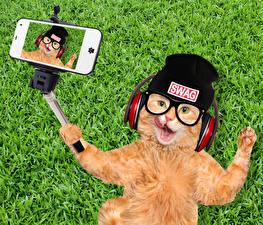 Картинка Коты Трава Рыжий Шапки Очки Наушники Смартфон Селфи Смешные Животные