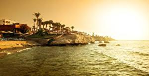 Фотографии Побережье Рассветы и закаты Утес Пальмы Red Sea