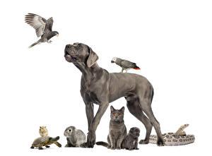 Картинки Собака Птица Попугаи Кролики Кошка Черепахи Морские свинки Змея Белым фоном Щенков Серая животное