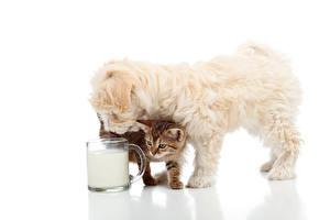 Фото Собаки Кошки Молоко Белый фон Щенки Котята Чашка Животные
