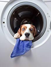 Фотографии Собаки Оригинальные Морда Забавные Животные
