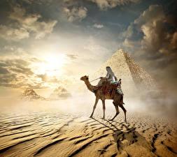 Фотографии Египет Пустыни Верблюды Пирамиды Cairo животное