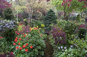 Обои Англия Сады Тюльпаны Весна Кусты Дизайн Walsall Garden Природа