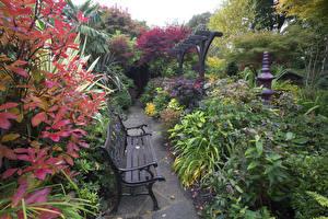 Обои Англия Сады Кусты Скамейка Walsall Garden Природа