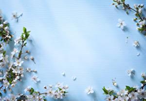 Фотографии Цветущие деревья Цветной фон Ветки Цветы