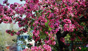 Фотография Цветущие деревья Весна Ветвь Цветы