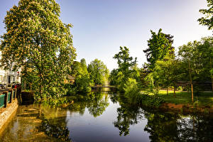 Картинка Германия Парки Речка Цветущие деревья Bonn Botanischer Garten Природа