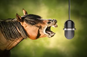Фотография Лошади Микрофон Забавные Голова Животные