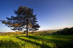 Фотография Италия Луга Холмы Деревья Трава Umbria