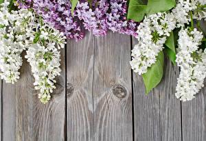 Обои Сирень Доски Цветы картинки