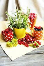 Картинки Маттиола Ягоды Смородина Крыжовник Цветочный горшок