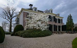 Обои Нидерланды Здания Цветущие деревья Весенние s-Graveland Города