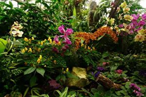 Фотографии Орхидеи Природа