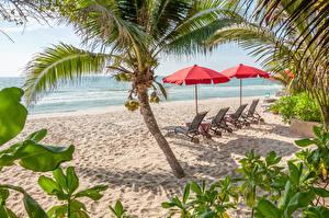 Фото Пальмы Пляж Песок Лежаки Природа