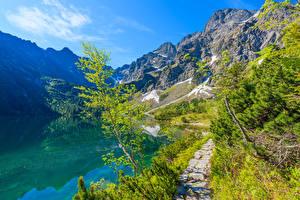 Картинки Польша Горы Озеро Деревья Morskie Oko lake Tatra Mountains