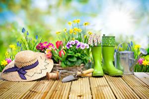 Фотографии Первоцвет Нарциссы Гиацинты Весна Доски Шляпы Сапоги Цветы