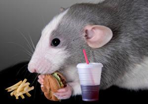 Фотография Грызуны Мыши Гамбургер Картофель фри Быстрое питание Стакана Морда