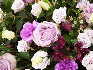Обои Розы Лизантус Альстрёмерия