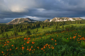 Картинки Россия Сибирь Горы Леса Трава Altai Mountains Природа
