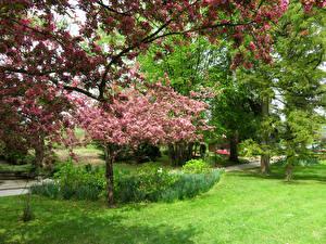 Картинка Словения Парки Весна Цветущие деревья Газон Mozirski gaj Природа