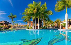 Фотографии Испания Курорты Канары Плавательный бассейн Пальмы Tenerife Города
