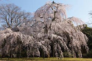 Картинки Весна Цветущие деревья Природа