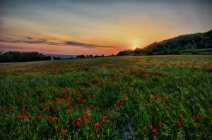 Обои Рассветы и закаты Поля Маки Природа