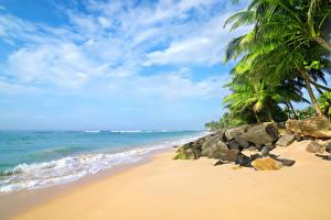 Картинки Тропики Берег Камни Волны Пальмы Песок Природа