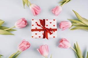 Обои Тюльпаны Цветной фон Розовый Подарки Бантик Цветы