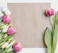 Фотография Тюльпаны Эустома Шаблон поздравительной открытки Цветы