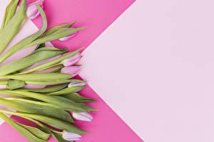 Картинка Тюльпаны Розовый