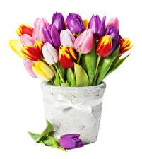 Фотографии Тюльпаны Белый фон Ваза Разноцветные Цветы