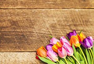Фотографии Тюльпаны Доски Цветы