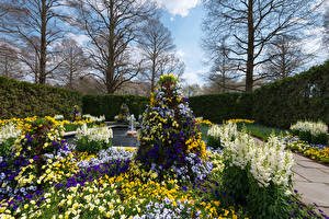 Картинки США Сады Фиалка трёхцветная Гладиолусы Дизайн Кусты Longwood Gardens Kennett Square Природа