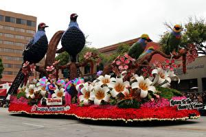 Фотографии Штаты Парки Птицы Попугаи Розы Калифорния Дизайн Pasadena Природа