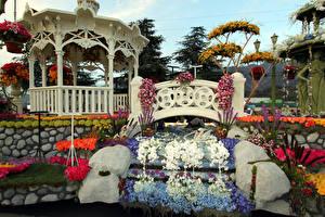 Обои Штаты Парки Орхидеи Розы Калифорния Дизайн Pasadena Города
