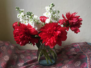 Фотография Букет Пион Левкой Цветы