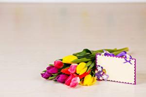 Картинка Букеты Тюльпаны Цветной фон Шаблон поздравительной открытки Цветы