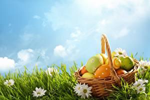 Фотография Ромашки Небо Пасха Яйца Корзина Трава Цветы