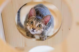 Обои Кошки Взгляд