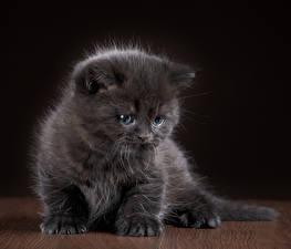 Фото Кошки Котята Серый Животные
