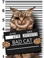 Картинка Креативные Кошка Морда Смешной животное
