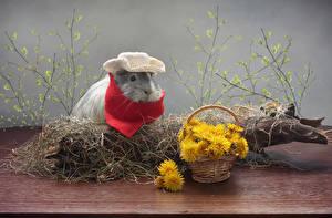 Фото Одуванчики Морские свинки Корзина Ветвь Шляпа Животные