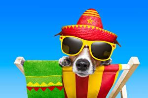 Фотография Собаки Цветной фон Джек-рассел-терьер Очки Шляпа Морда Забавные Животные