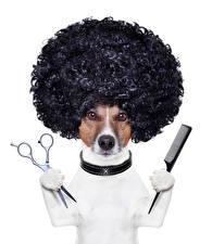 Фотографии Собаки Оригинальные Белый фон Джек-рассел-терьер Волосы