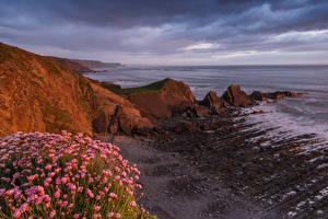 Фото Англия Побережье Рассветы и закаты Скала Кусты North devon coast Природа
