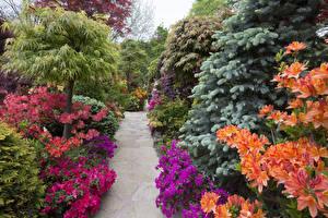 Фото Англия Парки Рододендрон Кусты Walsall Garden Природа