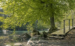 Картинка Франция Озеро Камень Деревья Lake Vert